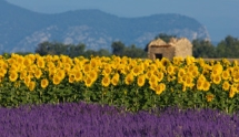 Gourmet Trail of South West France