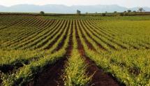 Rioja's Golden Mile